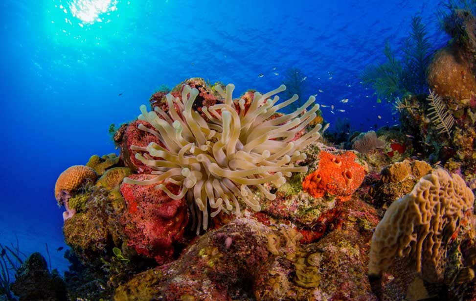 What You Need To Know About Coral Reefs