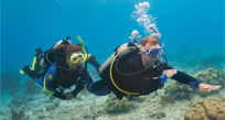 Learn To Scuba Group (5-6 Participants)